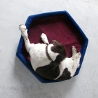KevinsSuperSizeSalvage_dogbedMediumDogTop